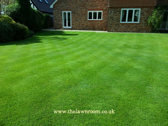 Lawn Care, Cheadle Hulme, Stockport, Cheshire